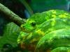 Krajta zelená - ZOO Ohrada